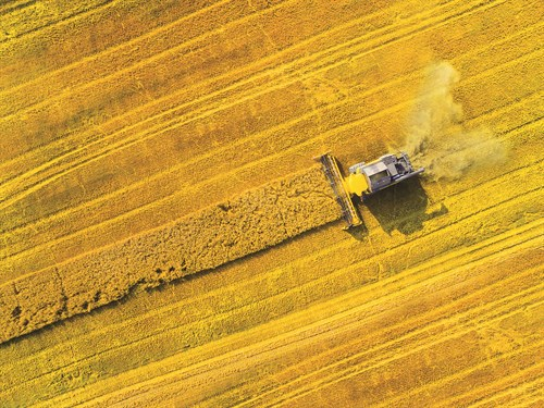 681770029 Aerial View Of Combine Harvester
